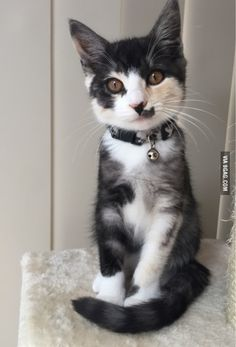 """Wow, so beautiful……..BLESS HIS KITTY HEART……BET HE GETS TEASED AND CALLED--""""HALF HITLER""""………ccp"""