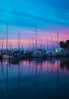 The marina in Coconut Grove, Florida