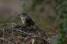 Birdie II - null