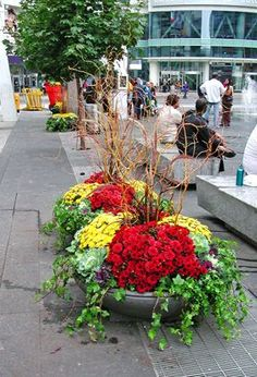 Individual saucers are grouped for mass impact at Yonge-Dundas Square. Fall Planters, Garden Planters, Fall Containers, Flower Containers, Commercial Planters, Foliage Plants, Autumn Garden, Fall Flowers, Container Gardening