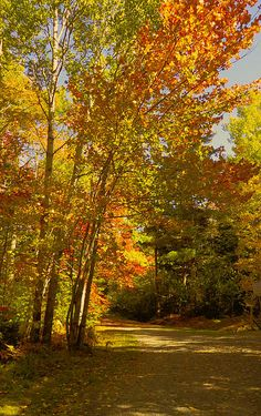 Take A Stroll - Trenton Park