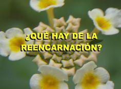 ¿QUÉ HAY DE LA REENCARNACIÓN? ¿VOLVEREMOS A TENER OTRA OPORTUNIDAD EN ESTA VIDA?