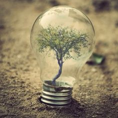 A lightbulb terrarium on #anotherloves