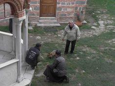 """Απομάκρυνση Αλεπούς απο Μοναχούς στην Ι.Μ.Φιλοθέου Enterprise """"Fox"""" in Monastery Filotheou"""