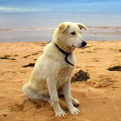 Auslandshunde - Sind Hunde aus dem Ausland gefährlich oder besonders liebenswürdig?