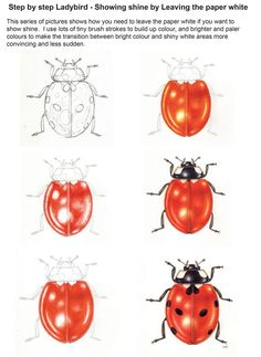 Step by Step Ladybird Watercolour illustration - Lizzie Harper Science Illustration, Botanical Illustration, Watercolor Illustration, Watercolor Paintings, Botanical Drawings, Digital Painting Tutorials, Art Tutorials, Ladybug Art, Ladybug Nails