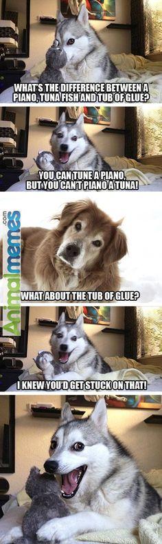 dog memes piano tuna fish and glue