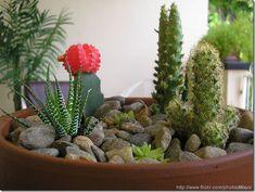 images about MiniatureFairy Gardens on Pinterest