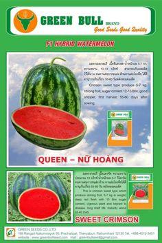 trồng dưa hấu đẹp, trồng dưa leo đẹp (dưa chuột), giống cây trồng Thái Lan Việt Nam www.trongduahaudep.com