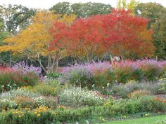 Photo of the Day - courtesy of our very own Executive Director. Fall in the Colonial Revival Gardens.