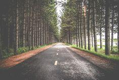 도로, 나무, 도, 여행, 방법, 아스팔트, 경치, 농촌, 방향