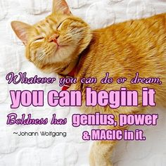 Whatever you can do or dream you can begin it. #Boldness has #genius #power and #magic in it. -Johann Wolfgang