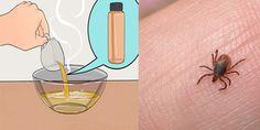 Como eliminar las pulgas y garrapatas de su casa y animales con este remedio super potente - Alimentacion Saludable
