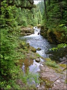 Brice Creek Trail--Cottage Grove, OR