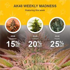 https://cannabis-seeds.nirvanashop.com/img/whopper/xl/7777f76bfffcdccc76993b9dc1ec6577.jpg
