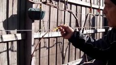 Training Grape Vines Pruning + Creating.pt8