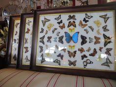 Decorative Framed Antique Butterly specimen-eras-of-style-004_main-29.JPG