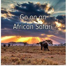 Zebra, wildebeest migration, giraffe, lion prides, wart hogs, meerkats, baboons, cape buffalo, rhino, leopard, cheetahs, gorillas, elephants