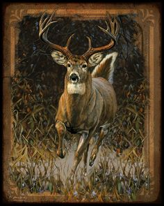 Deer Paintings | Whitetail Deer Painting