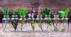 """Do you have a few favorite """"go-to"""" herbs? Why not grow them in water and keep them close at hand on the kitchen window sill or right on the counter? Water-grown herbs are just as flavorsome Essential Oils For Eczema, Cedarwood Essential Oil, Plantas Indoor, Winter Thema, Plante Carnivore, Herbs Indoors, Aquaponics System, Planting Vegetables, Growing Herbs"""