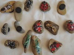 insect on stone magnets