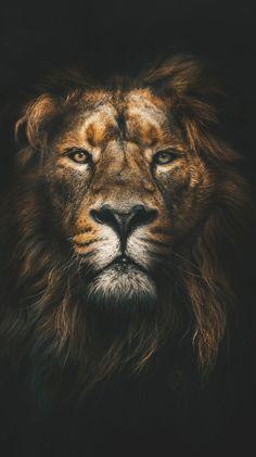 24 trendy ideas for lion art wallpaper iphone Image Lion, Image Hd, Tier Wallpaper, Animal Wallpaper, Wallpaper Keren, Orange Wallpaper, Wallpaper Art, 1080p Wallpaper, Wallpaper Lockscreen