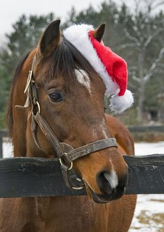 crusader sword wishes everyone merry xmas by connie224, via Flickr