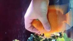 Fish funny pics, funny gifs, funny videos, funny memes, funny jokes. LOL Pics app is for iOS, Android, iPhone, iPod, iPad, Tablet
