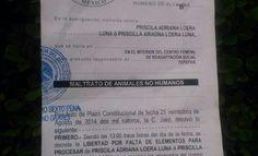 """EXIGIMOS la revocación del fallo de libertad de  """"Priscila Ariadna Loera Luna"""" maltratadora de animales."""