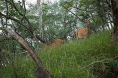 鹿 (The deer)