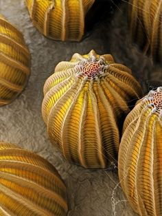 Butterfly Eggs_National Geographic