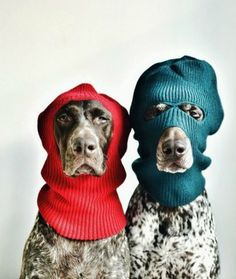 These animals have mastered the art of keeping warm