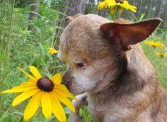 A Little Dog with a Big Dream | PetSmart Charities