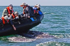 They'll find Jimmy Hoffa before they find any Humpbacks (I wish); Norway kills 729 whales in record year for hunt but demand failing for mea. Responsible Travel, Sustainable Tourism, Dolphins, Norway, Wildlife, Whales, Boat, Danger, Nature