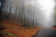 Misty autumn - San Giorgio Morgeto, Reggio Calabria