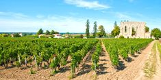 Spend an amazing day riding your bike in the beautiful St. Emilion vineyards, having lunch in a chateau and learning how to become a great wine taster! #wine #travel #booking