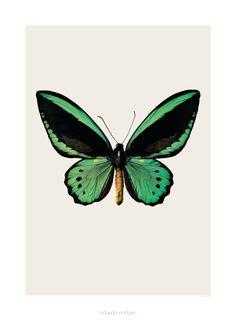 Poster butterfly S3 - Hagedornhagen - BijzonderMOOI* Dutch design online