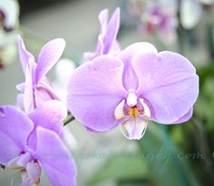 #orchidshow  www.nybg.org and a grand time was had by all