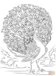 Advanced Peacock Coloring Page Free Printable Coloring Pages Within Peacock With Tail Open Coloring Pages Flamingo Coloring Page, Peacock Coloring Pages, Printable Adult Coloring Pages, Coloring Pages To Print, Coloring Book Pages, Coloring Pages For Grown Ups, Peacock Art, Peacock Colors, Peacock Feathers