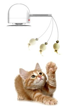 FroliCat HC1 Twitch Teaser Cat Toy * For more information, visit image link. (This is an affiliate link and I receive a commission for the sales)