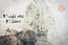 Mould and Mildew   Stay at Home Mum