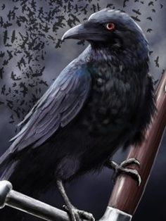 Techera Matias Roac, the raven. Cersei Lannister, Fantasy Warrior, Fantasy Anime, Fantasy Art, Golondrinas Tattoo, Quoth The Raven, Raven Art, Crow Art, Celtic Mythology