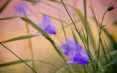 flower 2560x1600