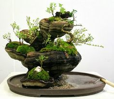 Mini terrarium-like garden with moss. LOVE.
