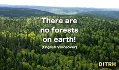 There are no forests on earth!  (ENGLISH VOICEOVER)
