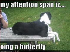 Pretty much Ginny`s attention span...lol