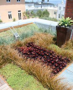 Rooftop Succulent Garden