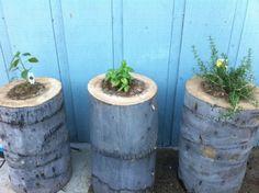 DIY Tree Stump Planters - Shelterness