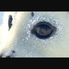Protect animals from the commercial sealing industry and all forms of cruelty! Harp Seal, Stop Animal Cruelty, Animal Protection, Seals, Puppies, Campaign, Animals, Baby, Life