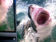 PLEASE WATCH: SHARK DREAM AND RAPTURE OF THE BRIDE.  14:44 (4/14/2014)  saw